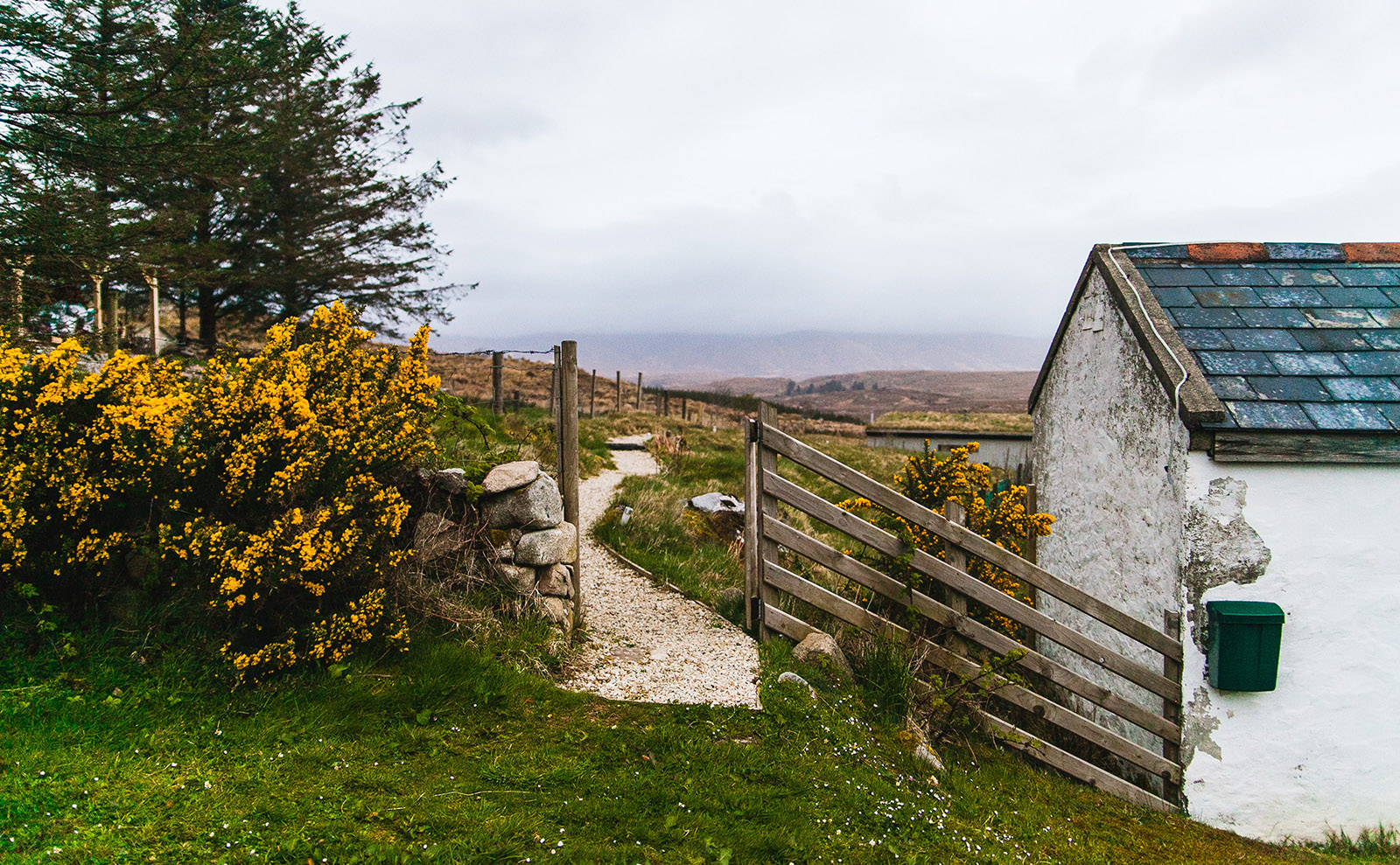 irish countryside with gate and flowers