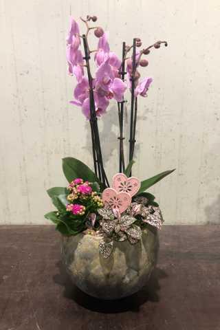 Roze 4-tak orchidee