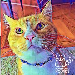 cat-05-hbh