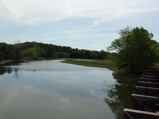 Marsh and wooded area from bridge.