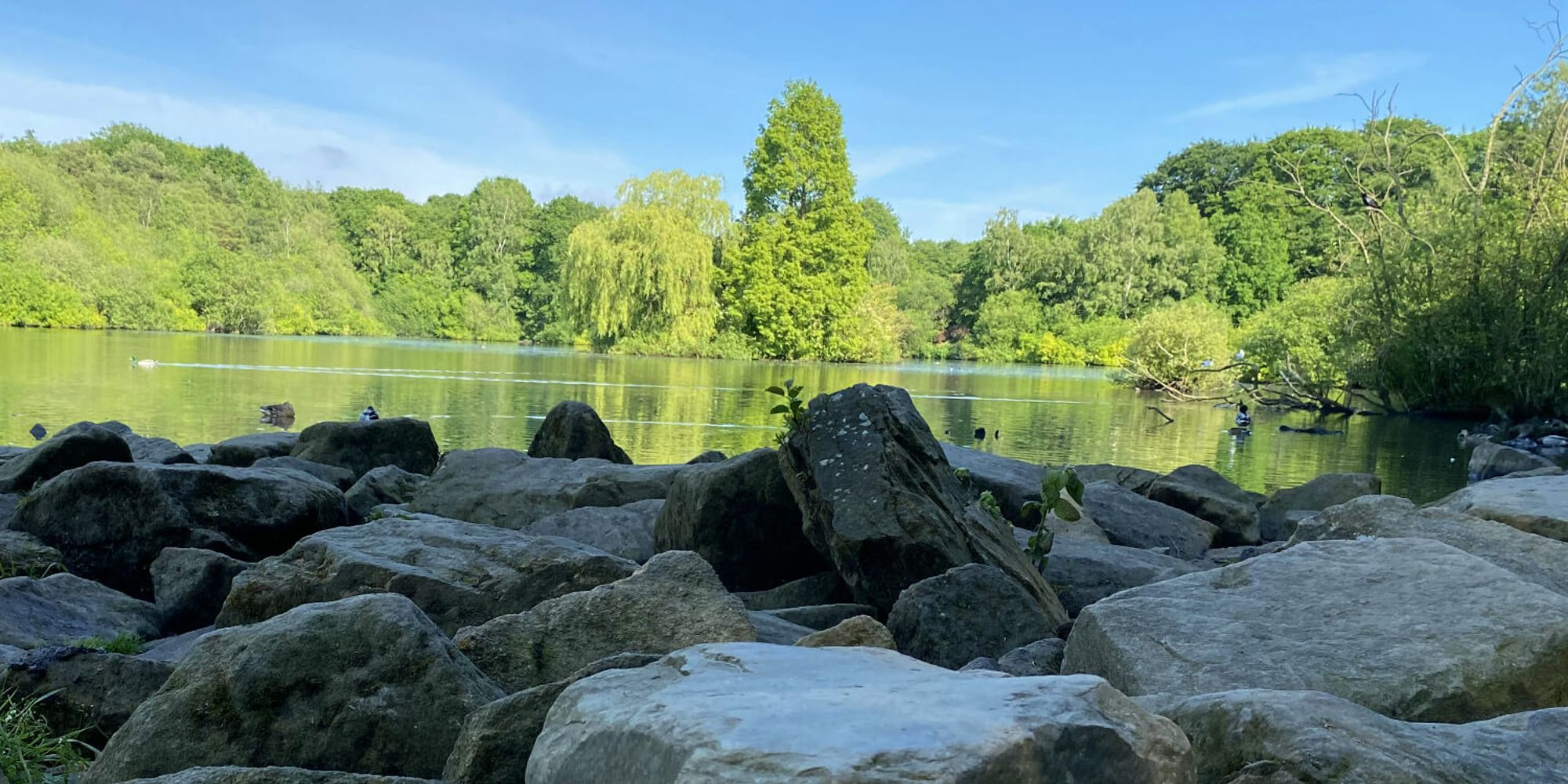 Golden Acre Park lake from a low angle over rocks