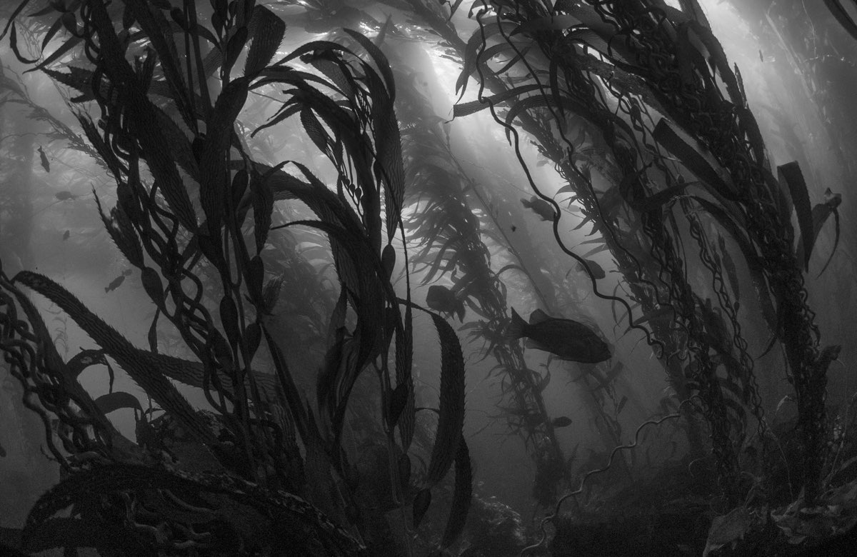 Kelp forest with fish