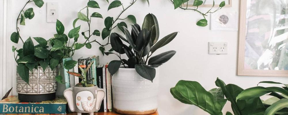 mini plants1