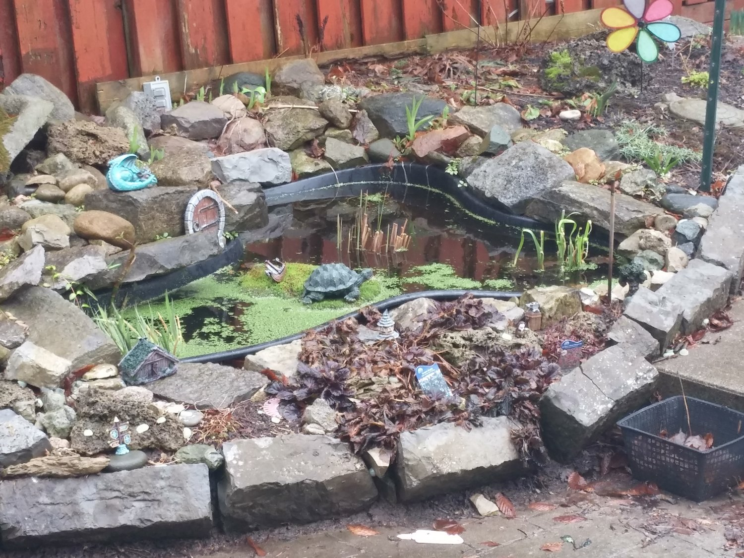 Our old pond