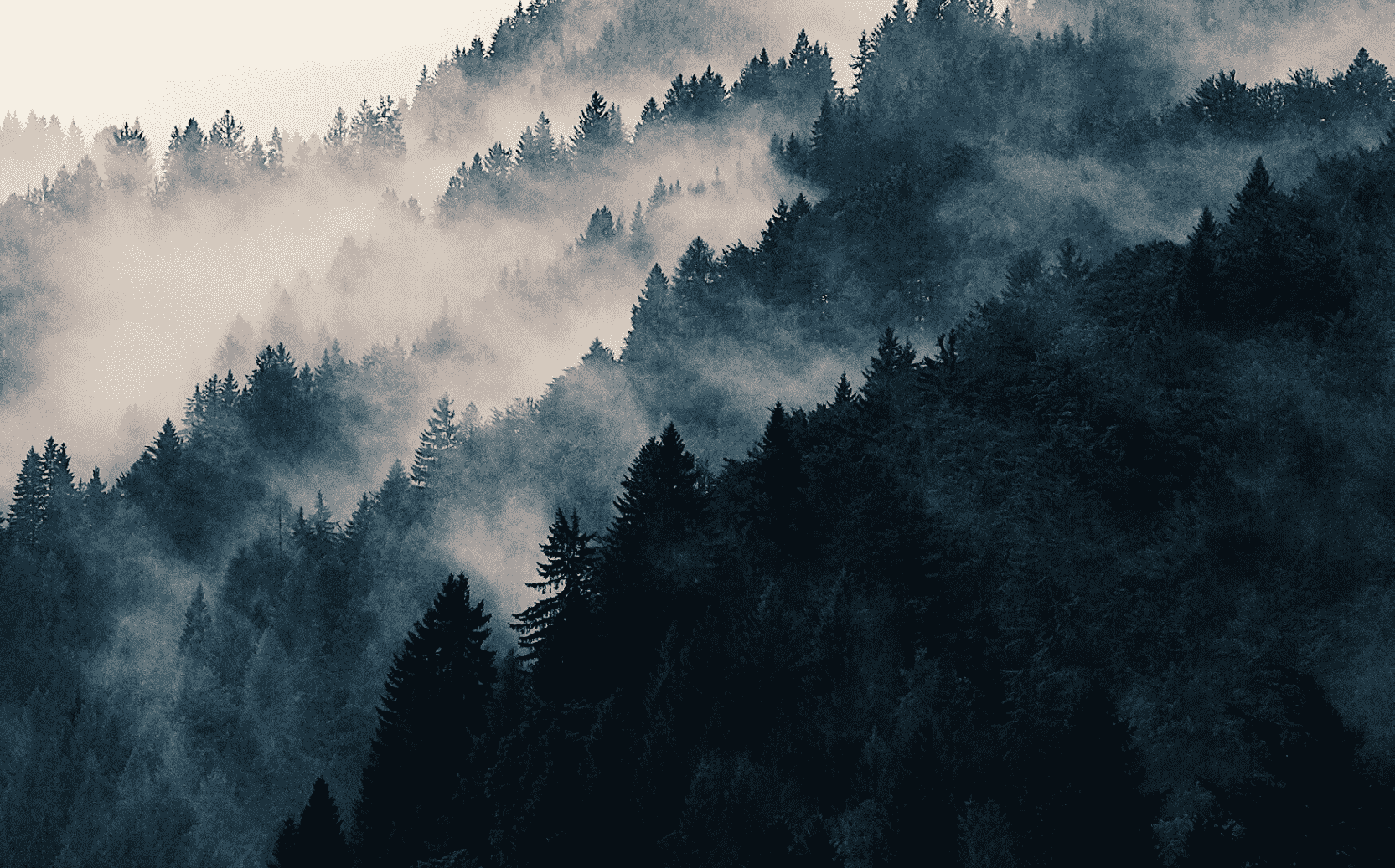 Background image of forest