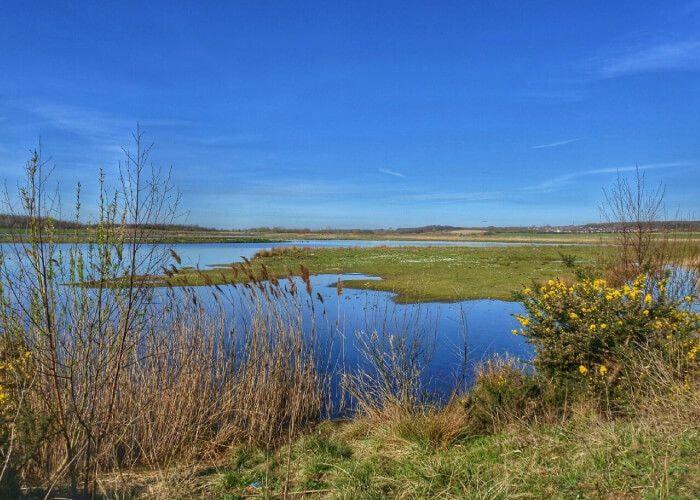 St Aidans Nature Reserve