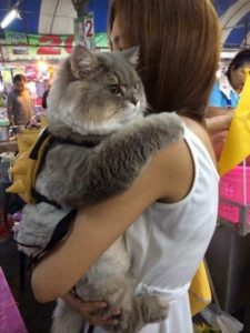 woman holding fat cat in arms