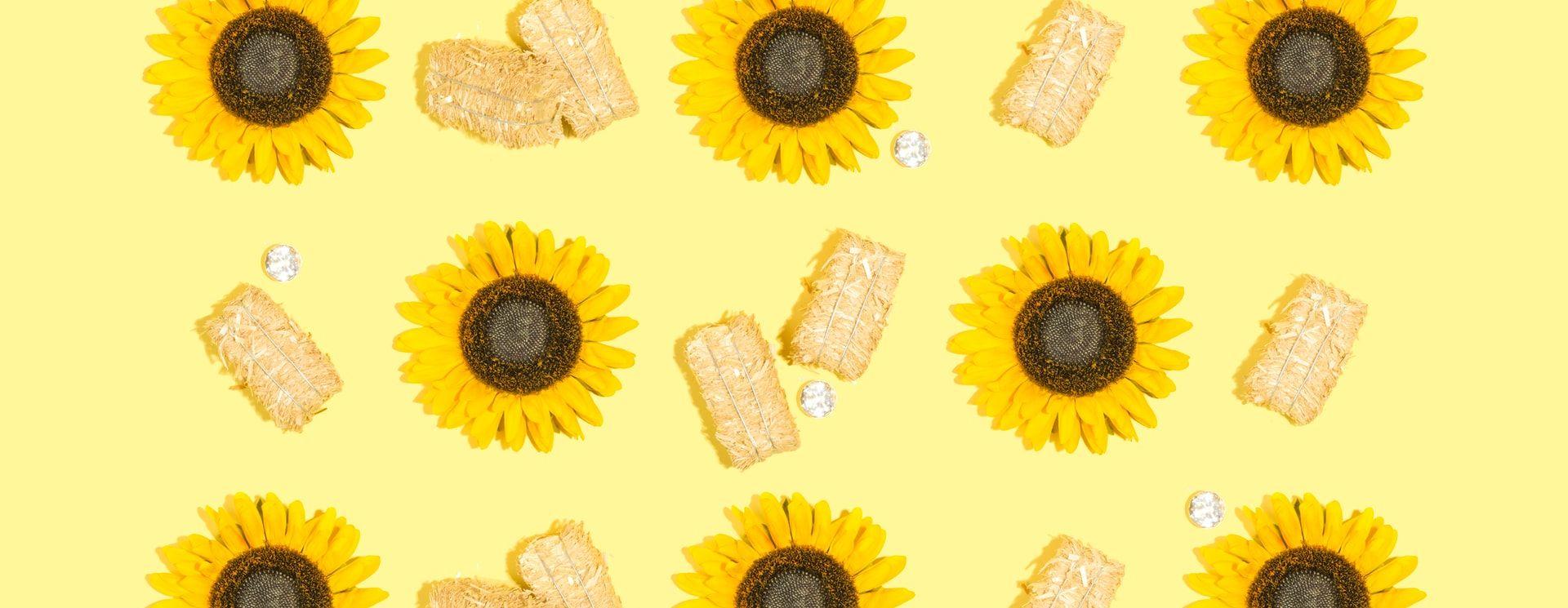 Semillas de girasol: beneficios y propiedades para la salud - Featured image