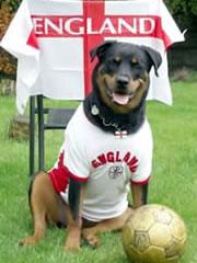 Mad English Dog!