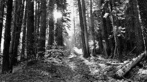 Sun filters through trees on the PCT