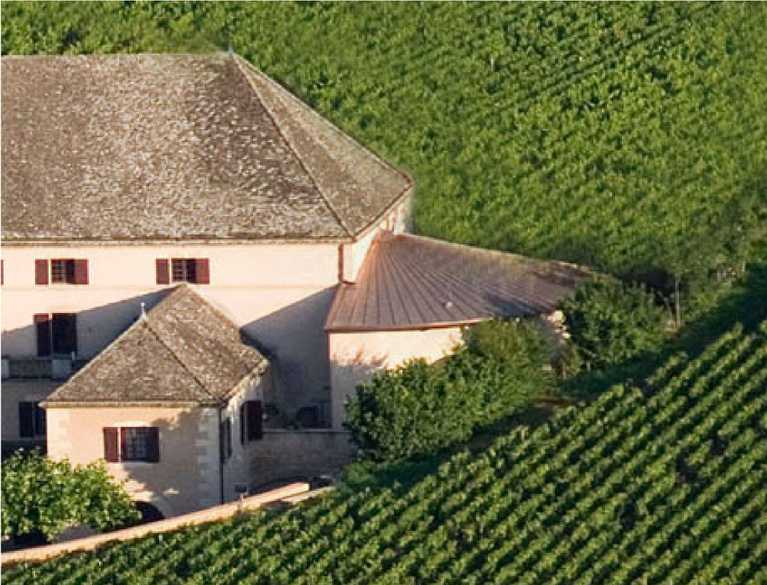 house surrounded by vineyard