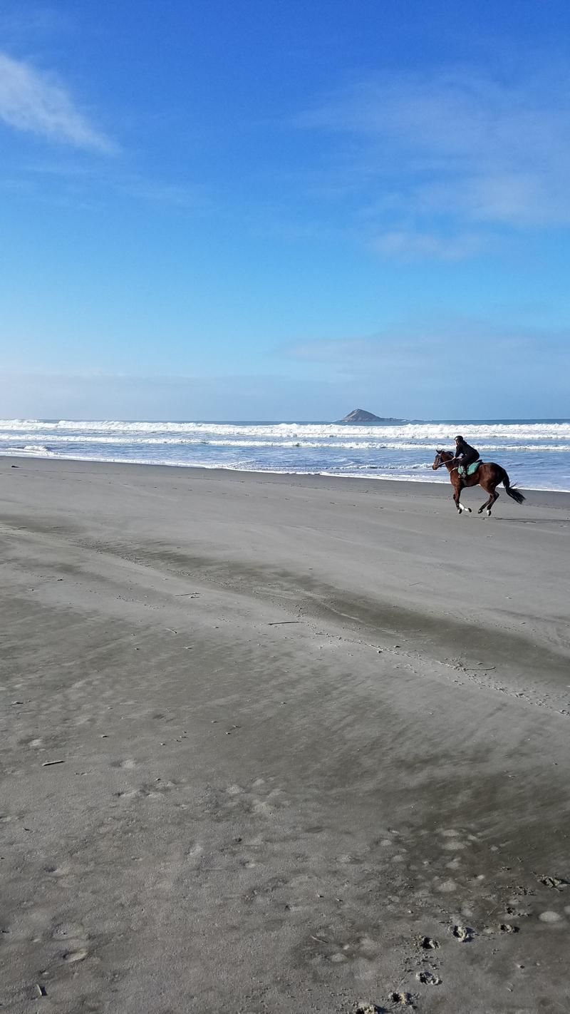Horses training at full gallop on the beach at low tide