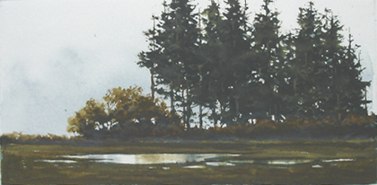 tall pine trees beside a pond
