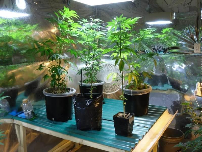Cannabis Cultivation in Australia