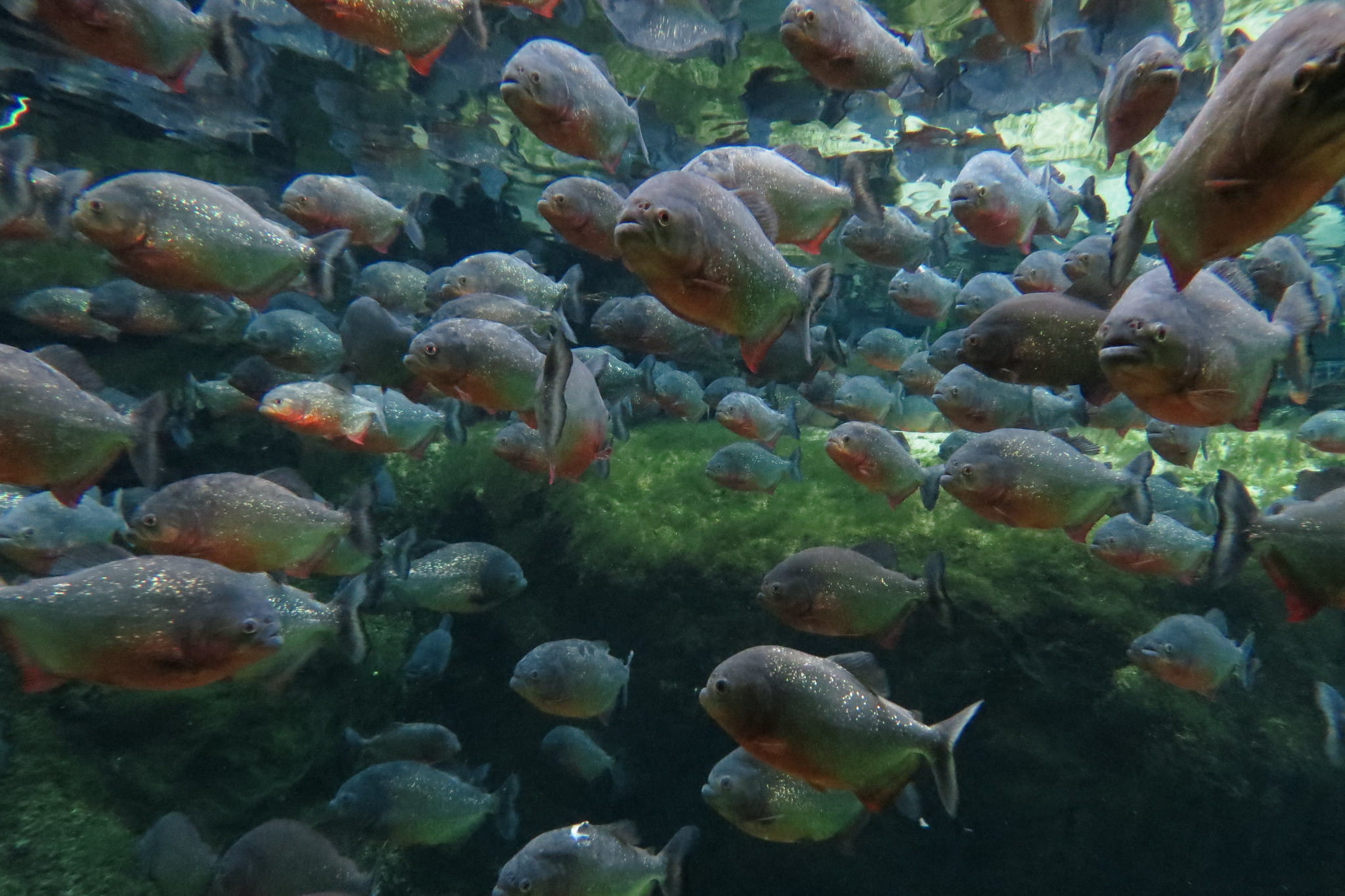 Os peixes mais surpreendentes do Brasil - Parte I