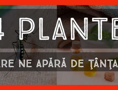4 plante care ne apără de ţânţari
