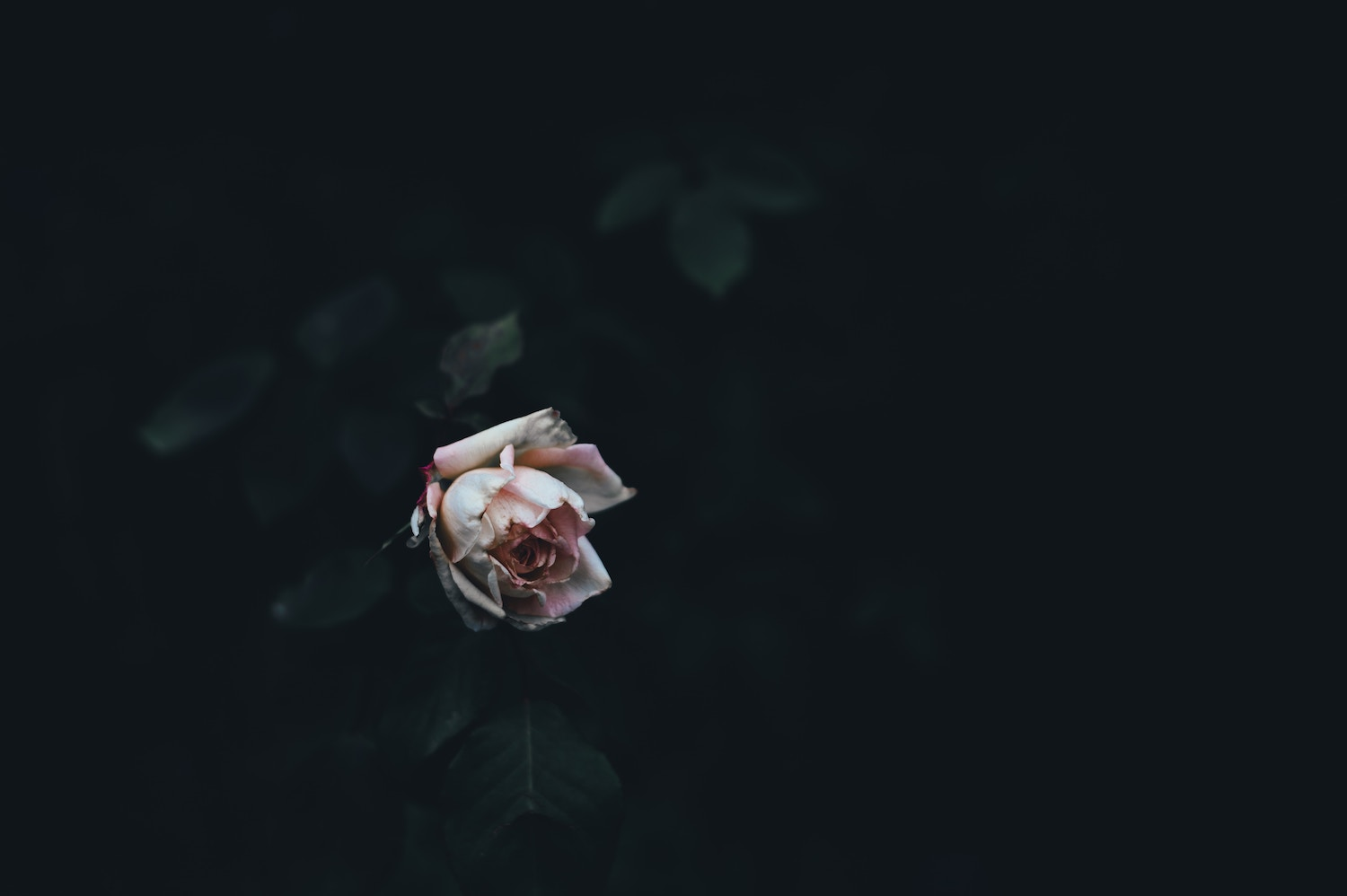 A photo of a blossoming flower in darkness by Annie Spratt