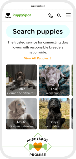 Search puppies card