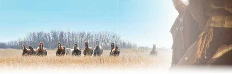 About 8 horses running in wheat