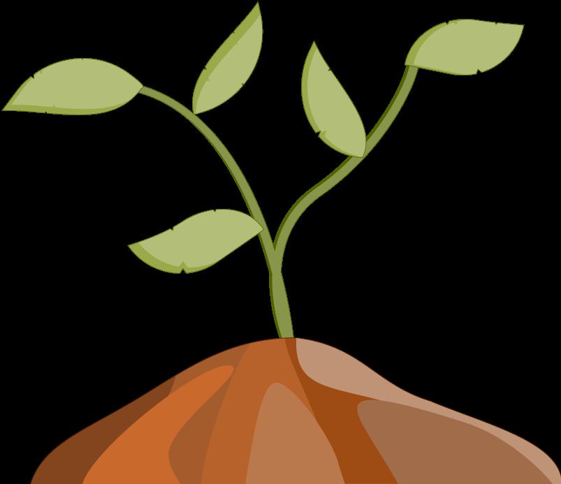Ilustración de medicina herbal