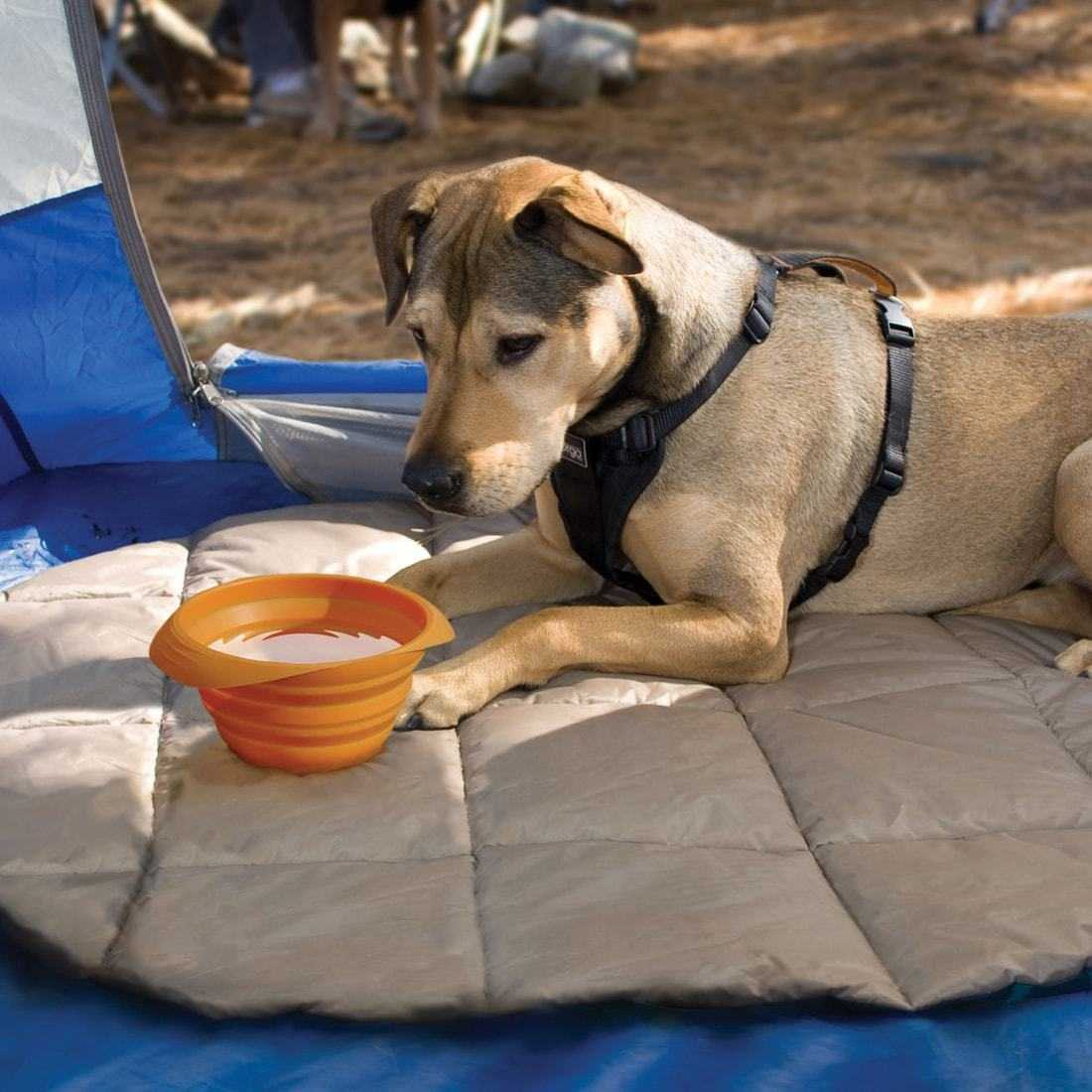7 Hydration Solutions for Every Dog