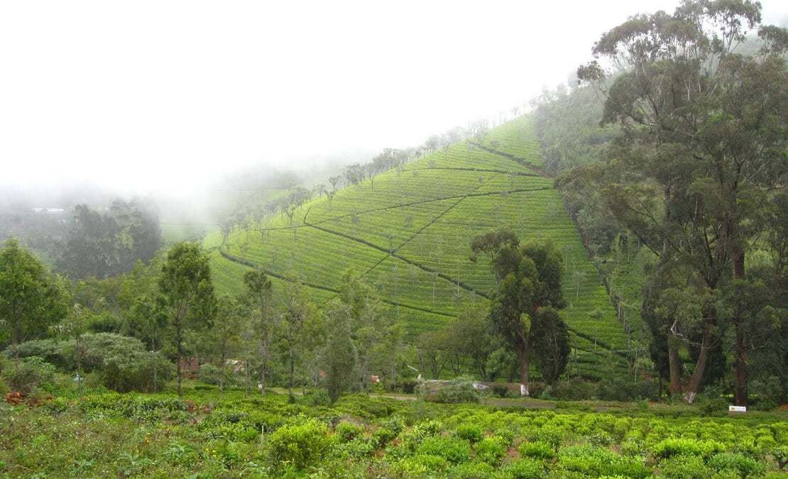 Misty day covering the tea estate nearby