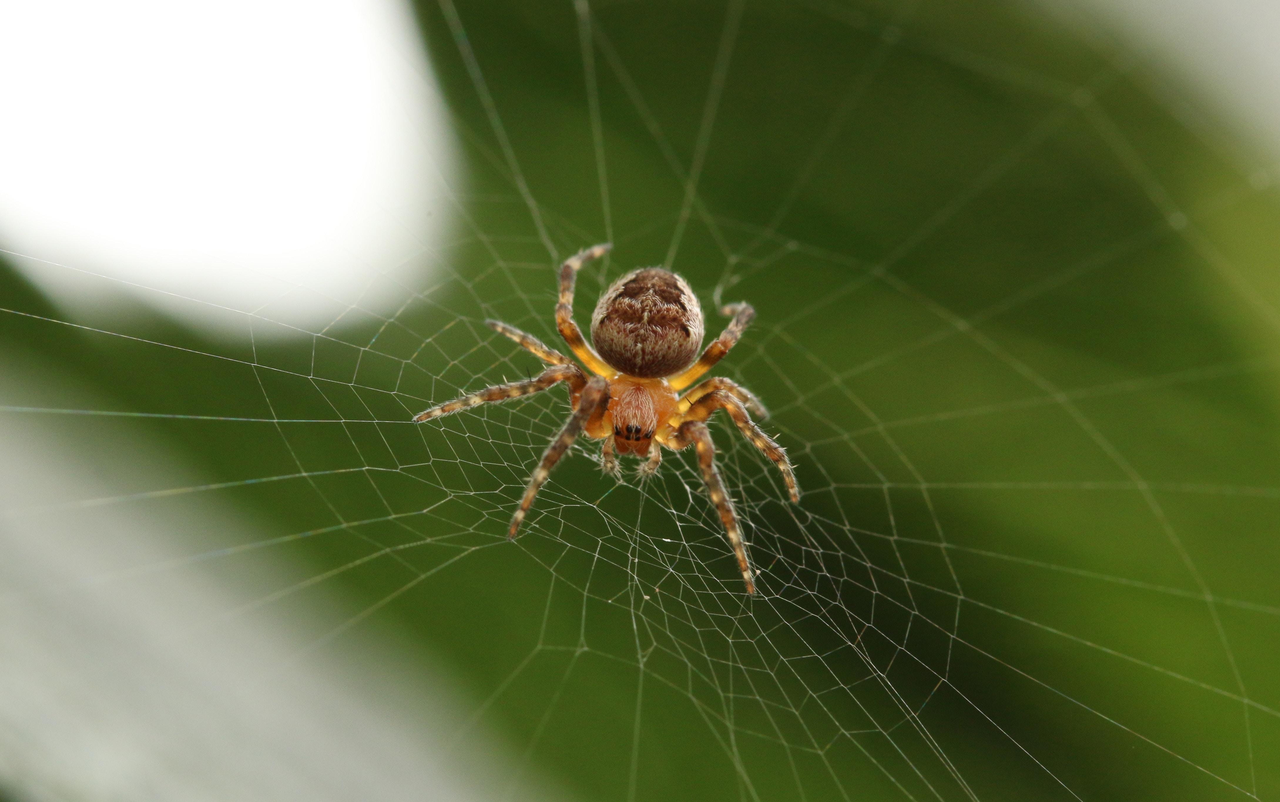 Imagem de uma teia de aranha