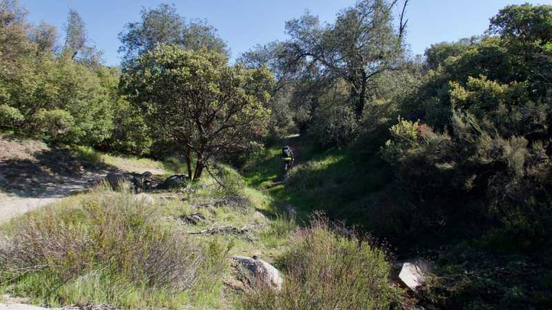 Trees on trail