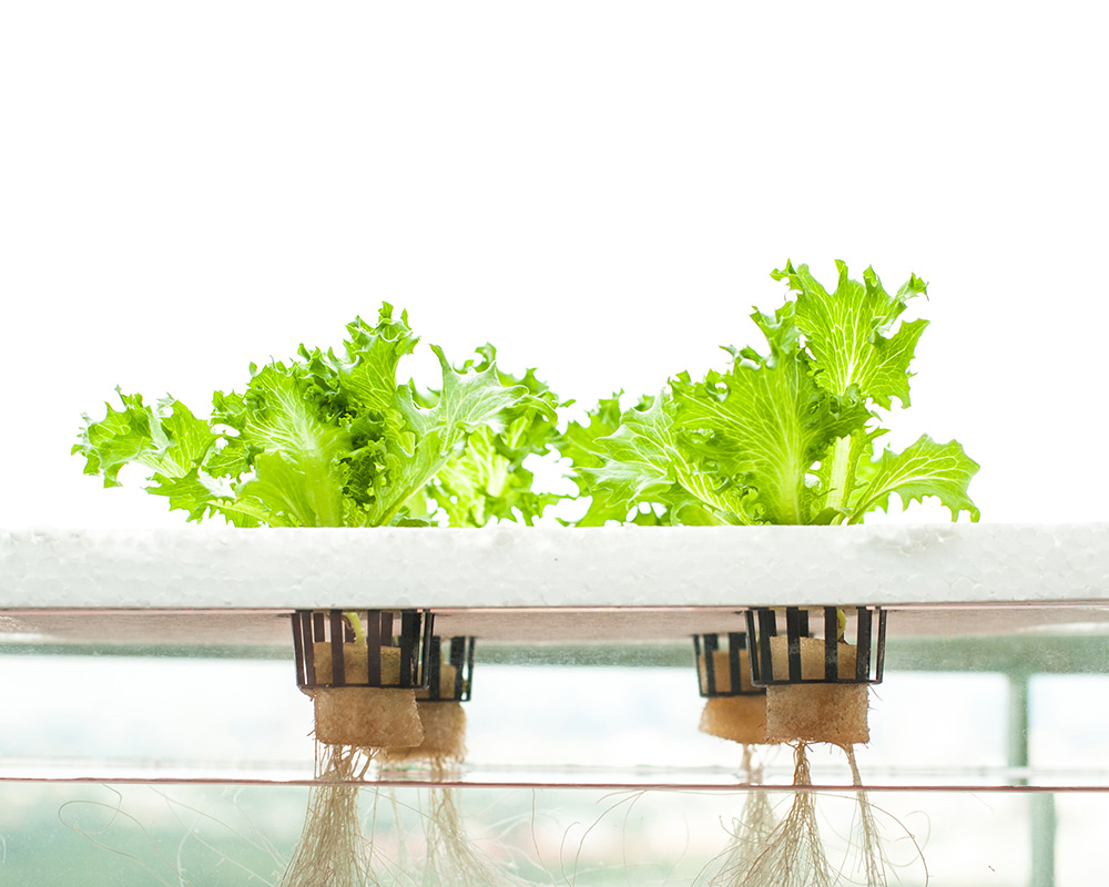 Hydroponics - The Future Of Farming