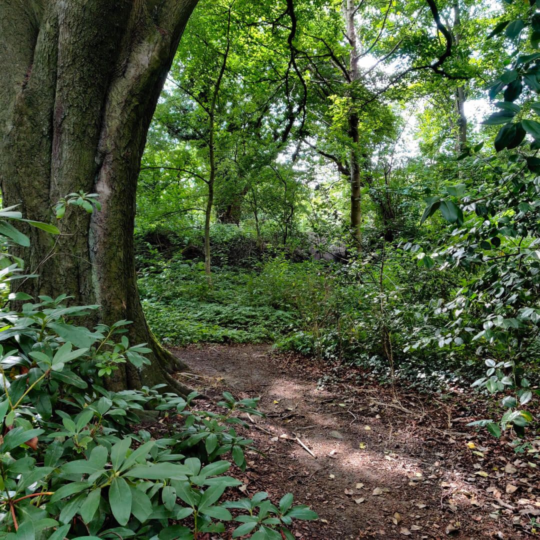 Calverley Wood