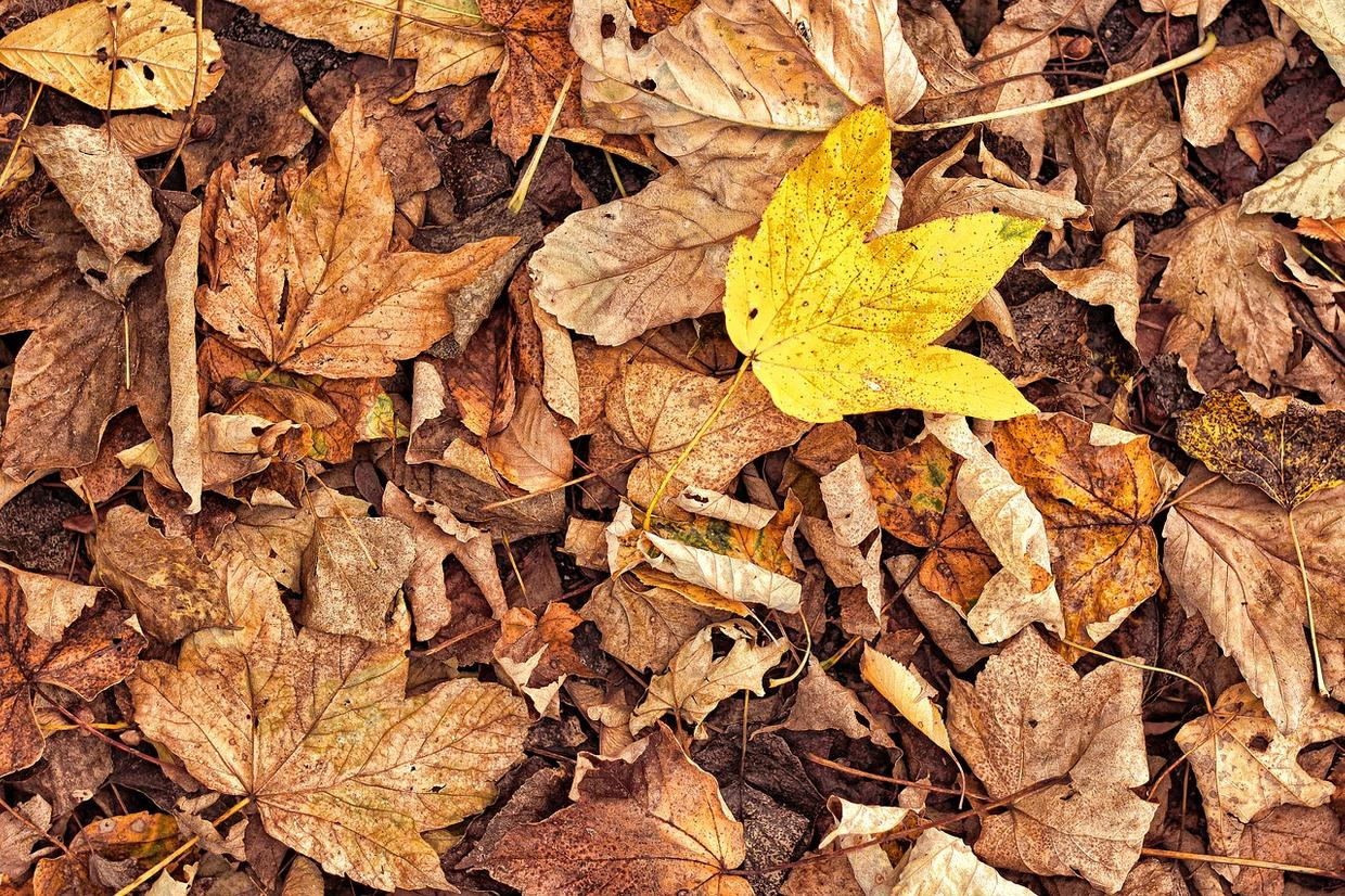 The Withered Yellow Leaf cover image