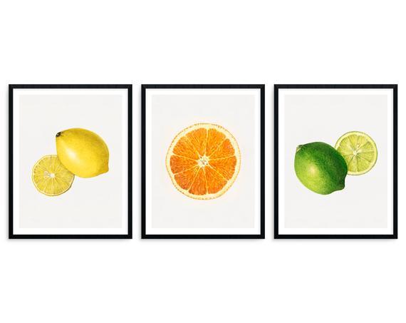 Citrus fruits vintage kitchen home decor