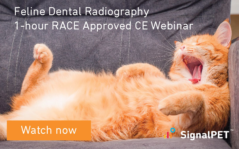 Feline Dental Radiography Webinar