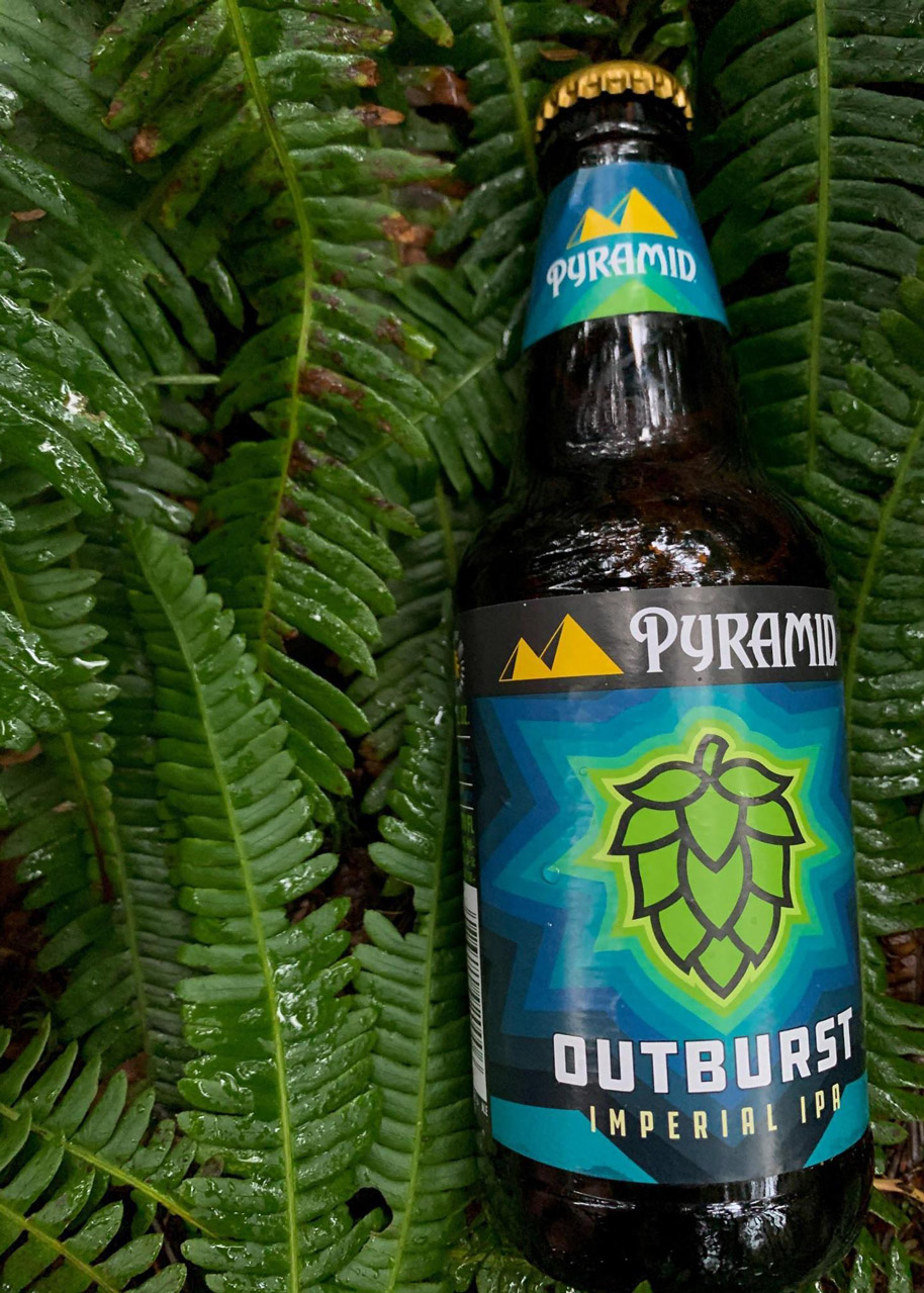 A bottle of Pyramid Outburst Imperial IPA resting on wet fern leaves