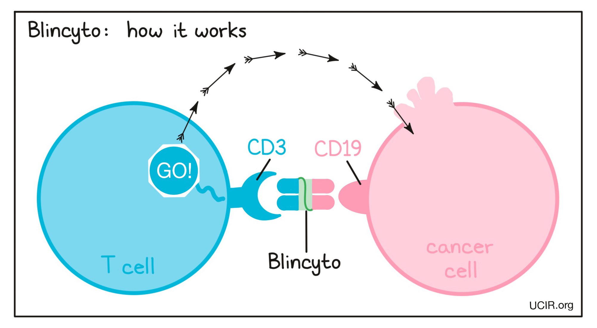 Illustration that shows how Blincyto works