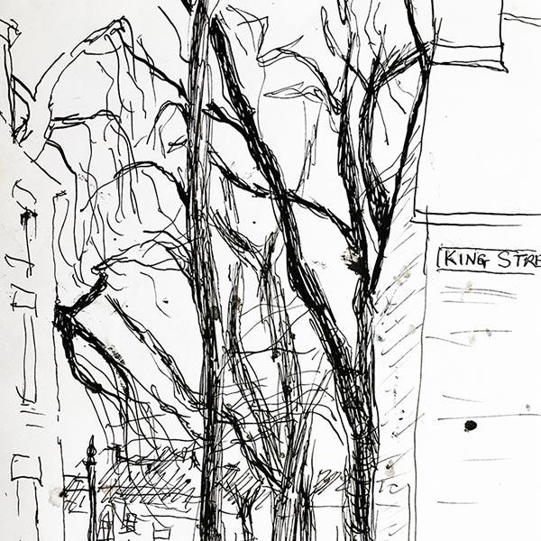 Cambridge Trees