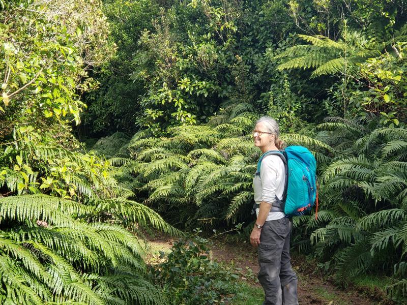 Rainforest adventuring