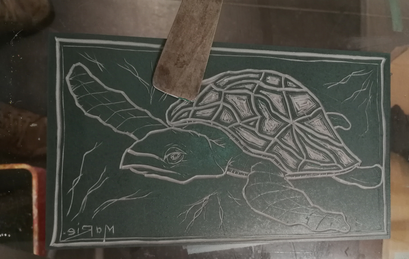 foto zeeschildpad lino - Marie