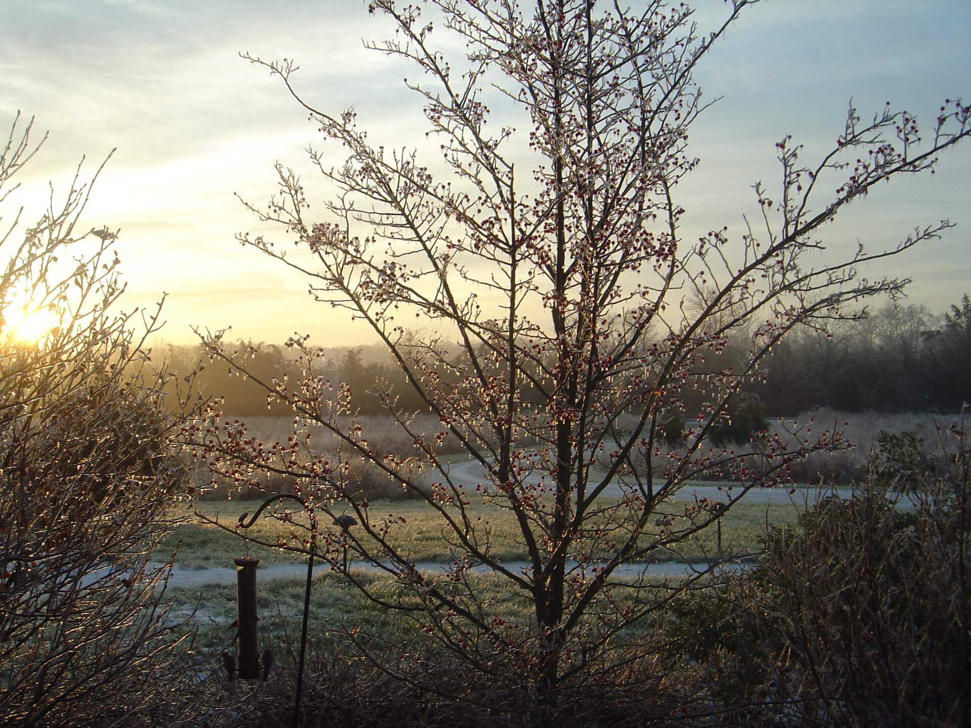 evening photo of tree, with meadow behind