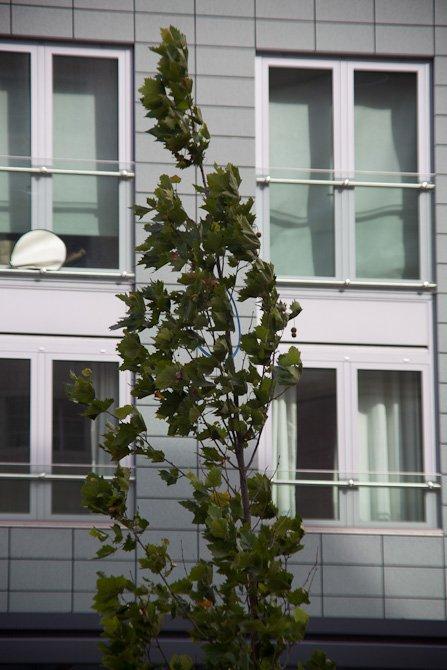 Urban Tree