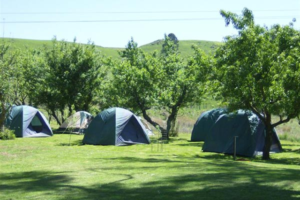 Tents pitched on the lawn near some small trees.