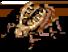 Ancient Golden Thief Bug
