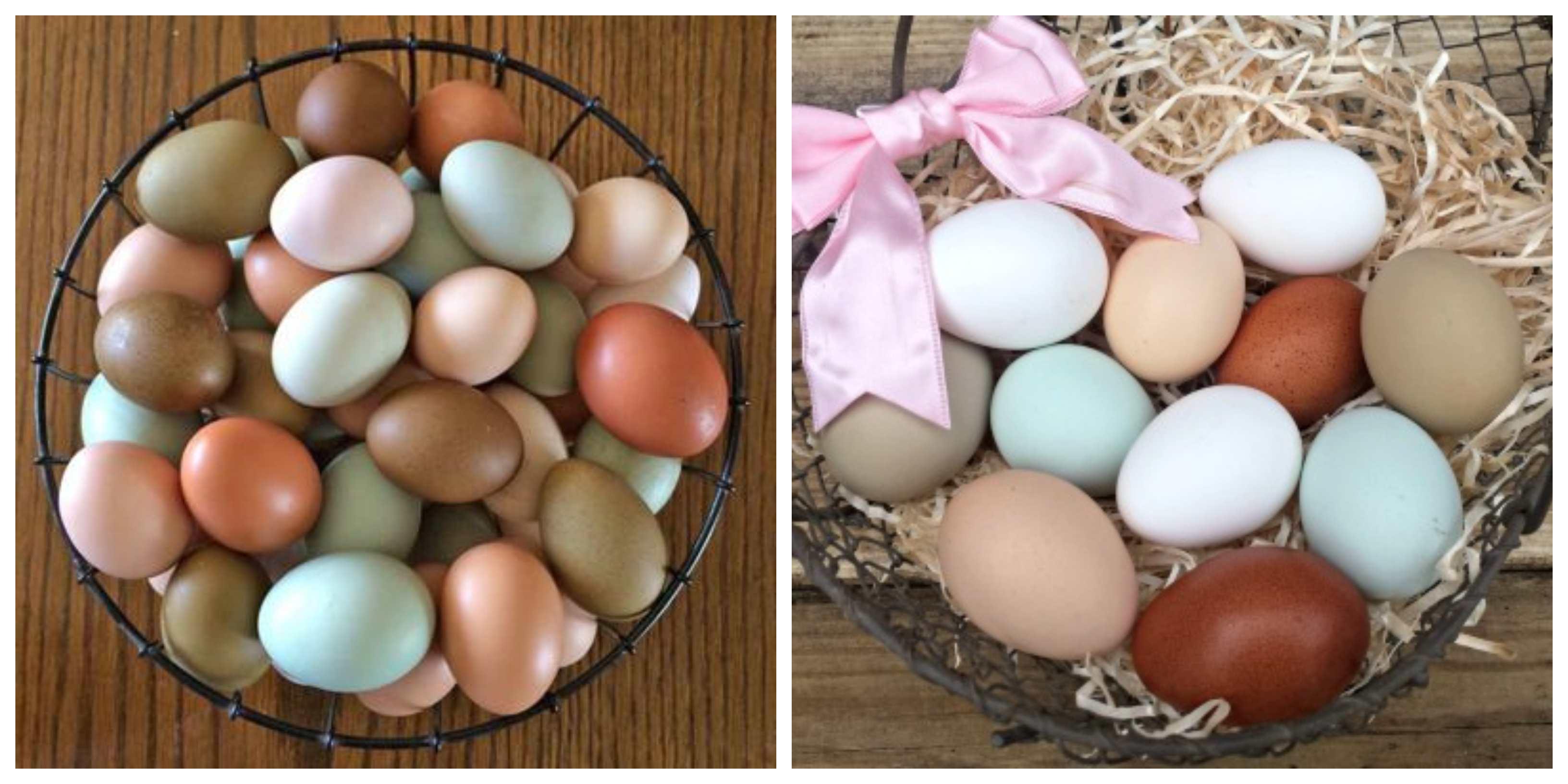 diiferent color chicken eggs
