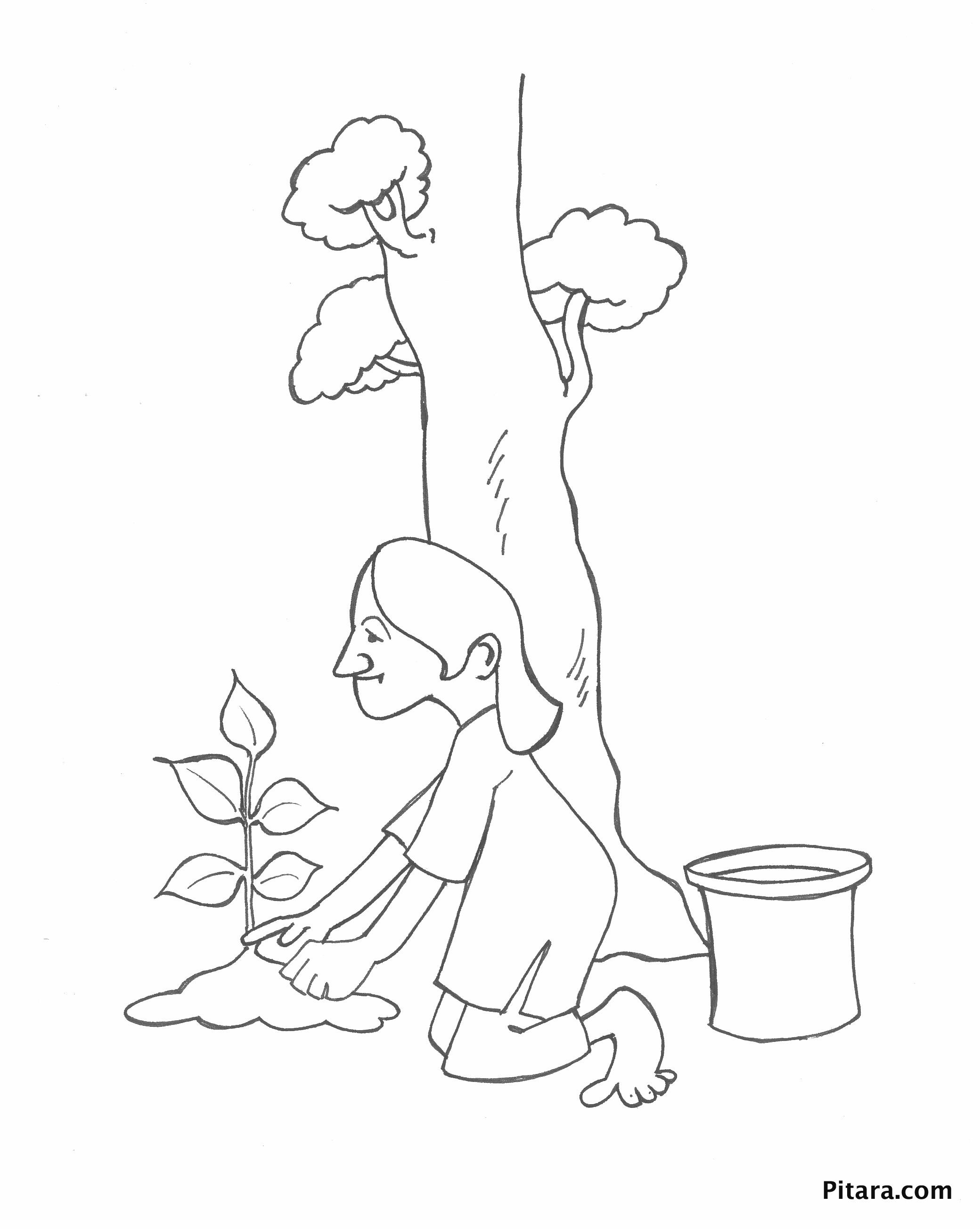 Planting a sapling