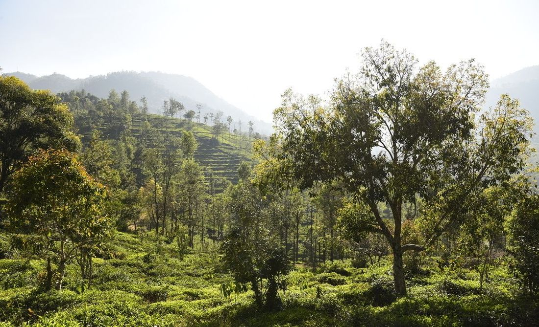 The beautiful Halakarai valley with streams, tea estates and oranges