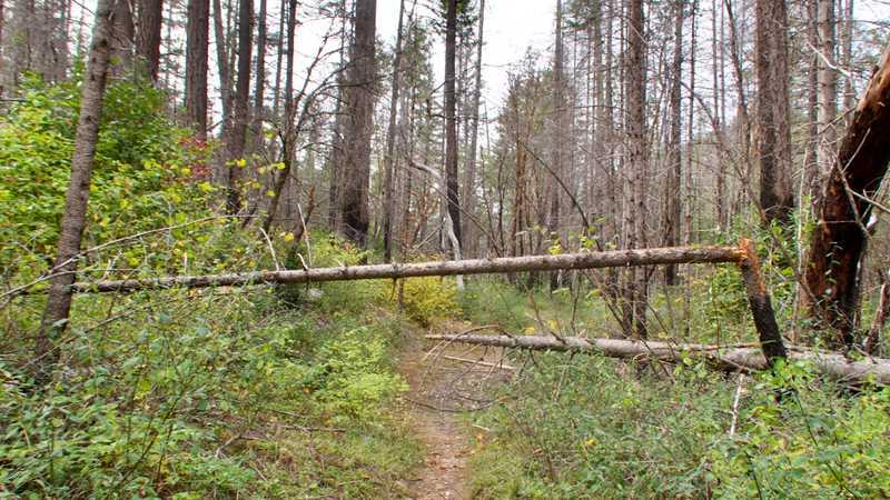 A blowdown over the trail