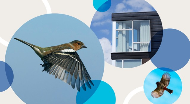 An illustration showing birds and windows that they could potentially fly into