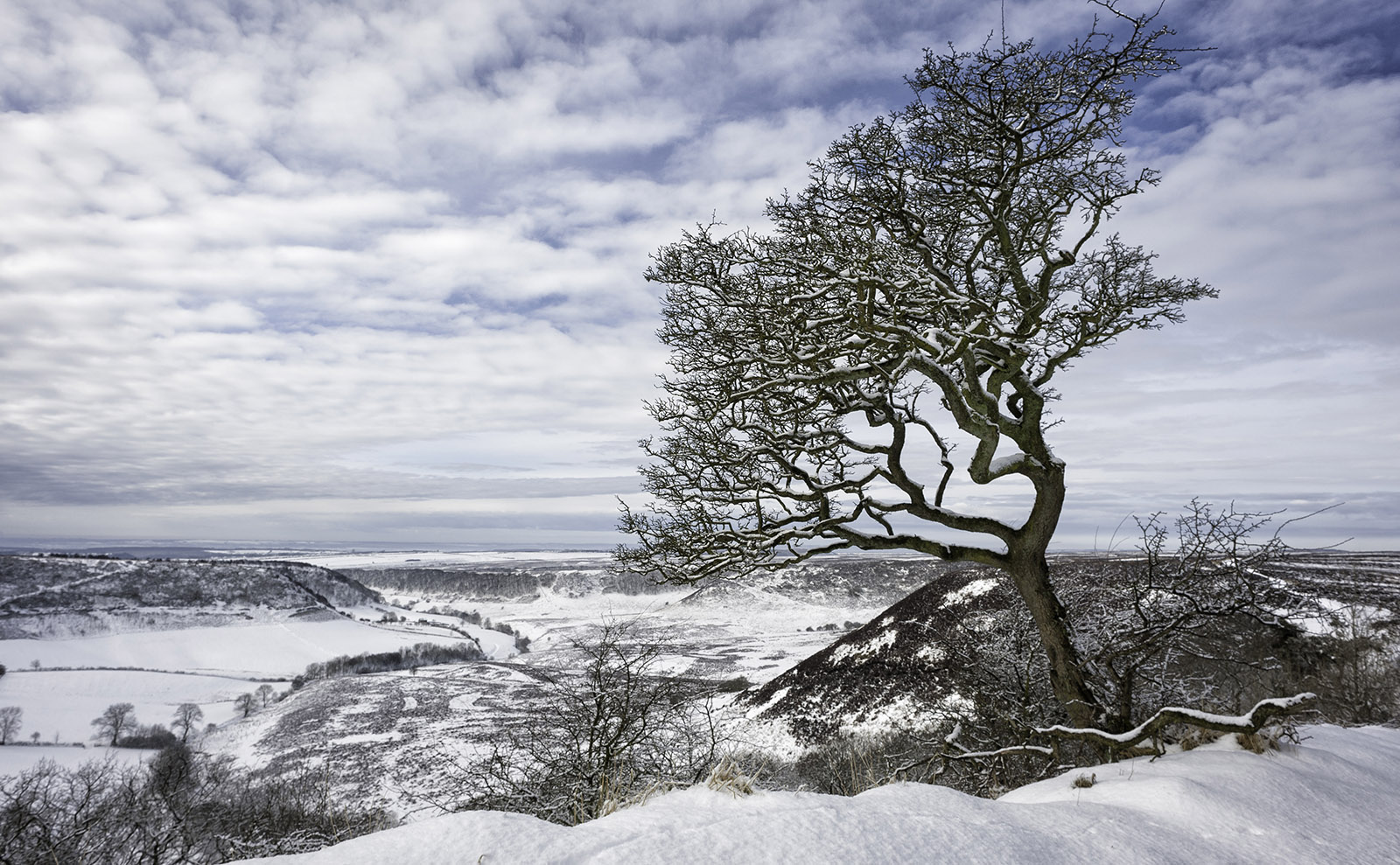 Gothic Adventure on the Yorkshire Moors with the Brontës in 'The Diabolical Bones'
