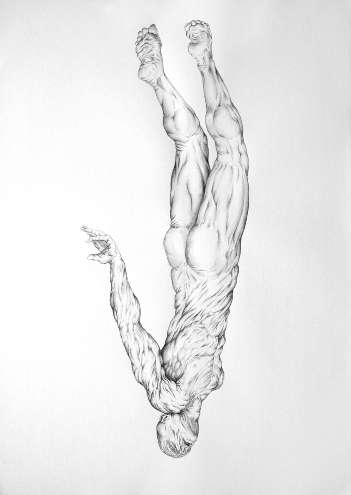 Planktonian People II, 2013, ink on paper, 16.5(h) x 23.25(w) inches