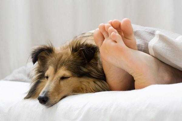 How to Keep Your Dog Comfortable in Hotels